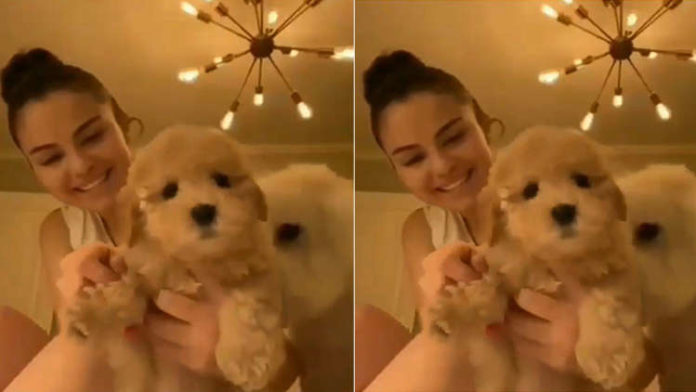 Selena Gomez Adopts A Foster Puppy While In Isolation