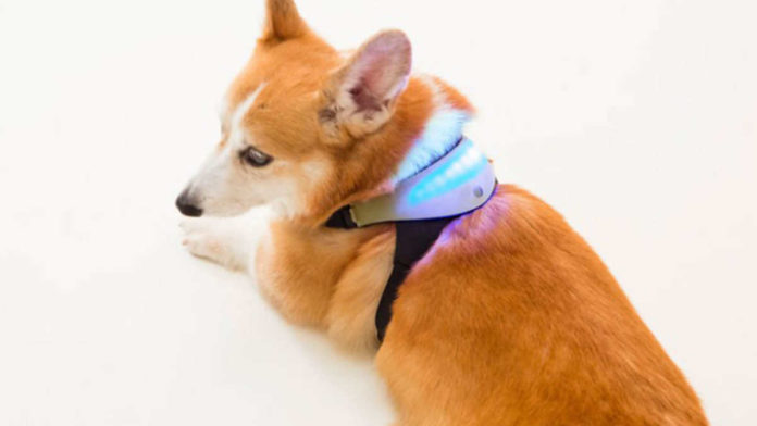 Smart wearable detects dog's mood, tells owner how it's feeling